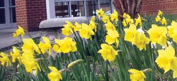 daffodils_02_06_20